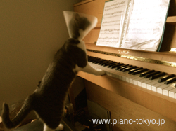 Cat play the piano